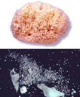 Retirado un lote de esponjas naturales por riesgo de provocar lesiones