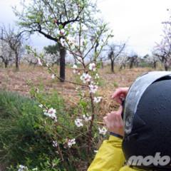 Foto 5 de 8 de la galería la-ruta-fallida-de-los-almendros-en-flor en Motorpasion Moto