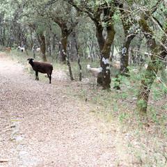 Foto 3 de 8 de la galería sony-a9 en Xataka Foto