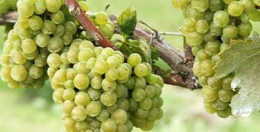 Alba, un vino para mujeres de la mano de Bodegas Murviedro