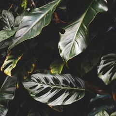 Foto 5 de 14 de la galería fondos-de-naturaleza-1 en Xataka Android