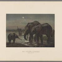 Descarga gratis 150.000 ilustraciones botánicas y de animales en la Biblioteca del Patrimonio de la Biodiversidad