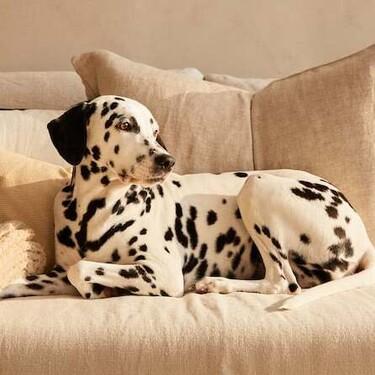 Tu perro a cuerpo de rey con la última colección de Zara Home
