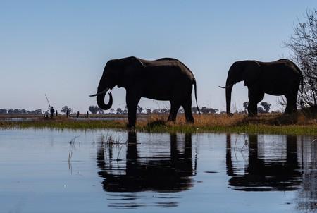 La misteriosa muerte de los elefantes de Botsuana: 350 ejemplares han aparecido muertos en dos meses sin causa aparente