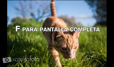 pantalla completa en lightroom
