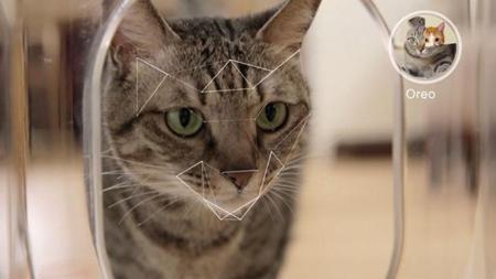 Bistro reconoce a tus gatos y monitoriza qué comen
