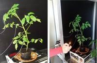 PLEASED, cuando las plantas se convierten en cíborgs