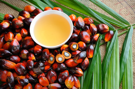 En un giro de guion sin precedentes, el aceite de palma resulta ser una herramienta imprescindible para defender la biodiversidad