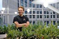 Descifran y publican en la red el código genético de diferentes especies de plantas medicinales