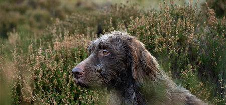 ¿Por qué domesticamos al perro? Para los humanos de hace 14.000 años fue una innovación tecnológica