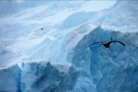 Antártida: para su preservación procuran poner límites al turismo