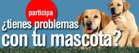 Cuatro ya busca mascotas para 'El encantador de perros'