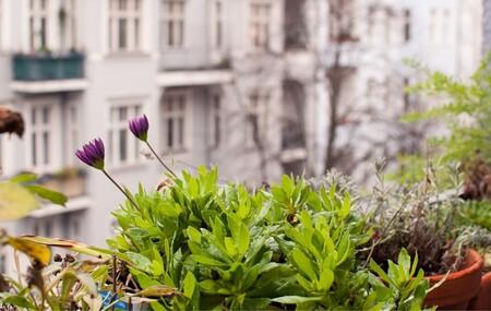 8 ideas para convertir tu terraza o tu balcón en un vergel