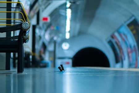 La curiosa foto de dos ratones peleando en el metro de Londres gana el premio del público del Wildlife Photographer of the Year