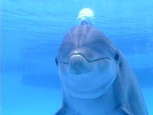 ¿Por qué se mueren los delfines?