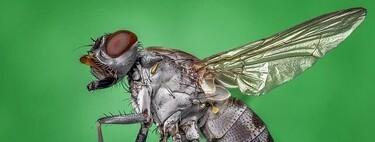 En cualquier casa normal encontraremos moscas de tantas especies diferentes que si hay diez, cinco serán diferentes entre sí