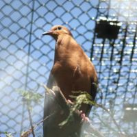 El Proyecto Paloma de Socorro, busca restablecer la biodiversidad en las islas mexicanas
