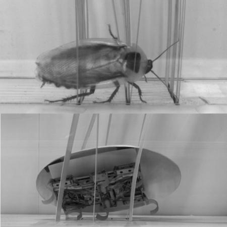 Este robot imita a las cucarachas y su extraordinaria habilidad para colarse por cualquier sitio