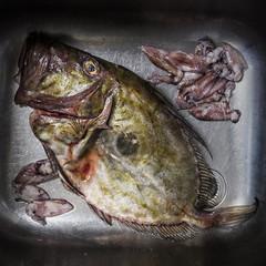 Foto 2 de 2 de la galería adolfo-enriquez-fish en Xataka Foto