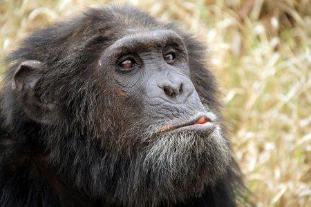 ¿Qué tipo de mono eres?