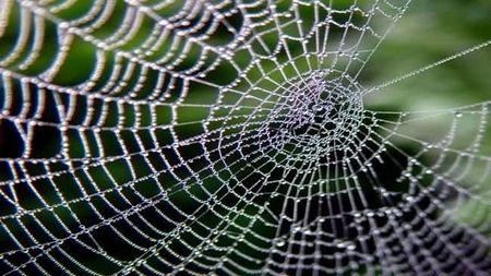 Principales ventajas del uso compartido de red en la empresa
