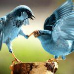 Twitter sigue sin remontar en facturación y usuarios. ¿Qué está haciendo al respecto?