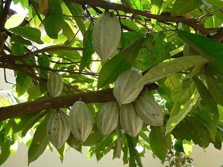 """La trampa dulce del batido de cacao homeopático """"bajo en materia grasa"""""""