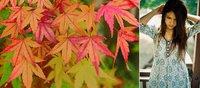 Empieza el otoño, empieza la caída natural del cabello: no hay que alarmarse