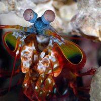 Los ojos más sofisticados de un animal no son los que crees