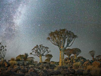 12 impresionantes fotos de árboles milenarios bajo cielos estrellados para darte toda la paz que necesitas