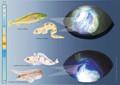 Los peces comienzan a padecer estrés