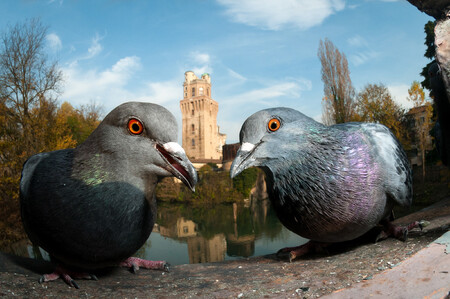 Web Urbanbirds Bronze Paolocrocetta