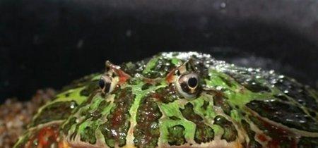 ¿Una rana se podría comer a un dinosaurio? Ésta tipo Pac-Man, sí