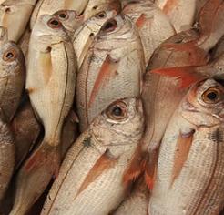 Manzanas y pescado durante el embarazo para prevenir alergias respiratorias