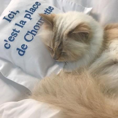 La gata Choupette de Karl Lagerfel cumple años y quiere esta curiosa lista de regalos
