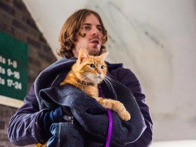 'A Street Cat Named Bob', tráiler y cartel de la película sobre el famoso gato británico