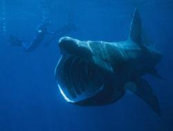 Tiburones en Tarragona