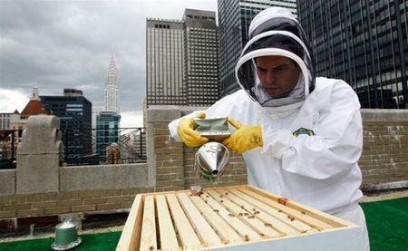 Waldorf-Astoria-beekeeping-rooftop