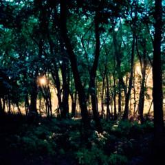 Foto 6 de 7 de la galería tres-three-tree en Xataka Foto
