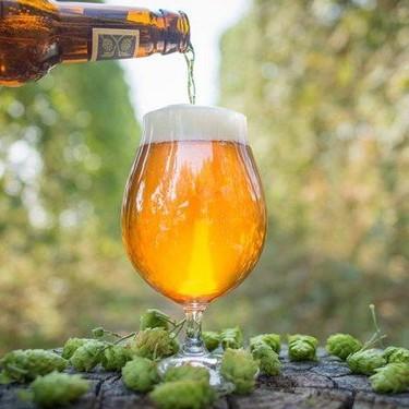 Más de 400 marcas de cervezas artesanales en el próximo Beer Fest 2020 de Texcoco