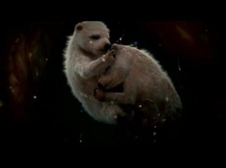 Polar Bears Imgur