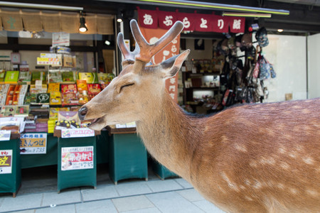 Planet Deer Yoko Ishii 2