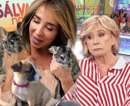 María Patiño y Mila Ximénez, distanciadas por culpa de un perrito y dos chinchillas ¡Guau!