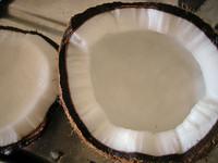 El coco, aliado de belleza y salud