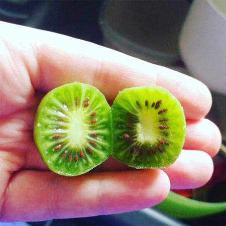 Los kiwi berries se suman a la sensación de las frutas miniaturas