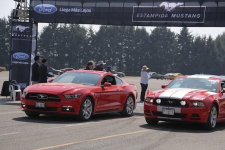 Estampida Mustang 7