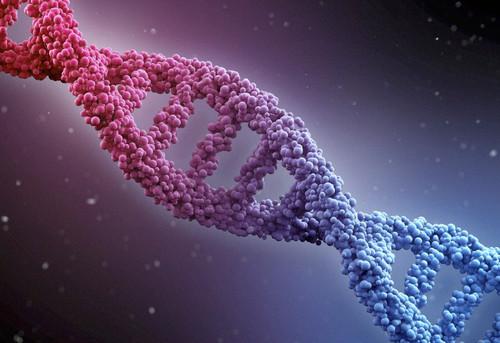 La dieta definitiva la decidirán nuestros genes
