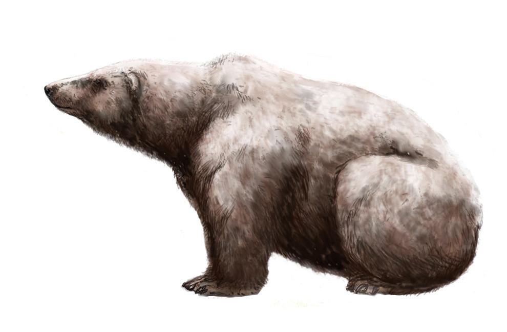 Este fue el oso más grande de todos los tiempos y tenía una masa de más de una tonelada