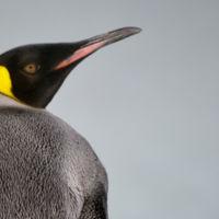 Linux Kernel 4.5 ya es oficial con mejora de bugs y soporte para AMD PowerPlay