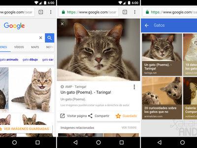 Cómo guardar y organizar tus fotos favoritas con Google Imágenes
